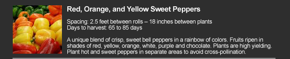 Red, Orange, and Yellow Sweet Pepper